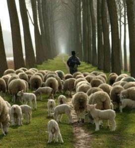Good Shepherd contemporary